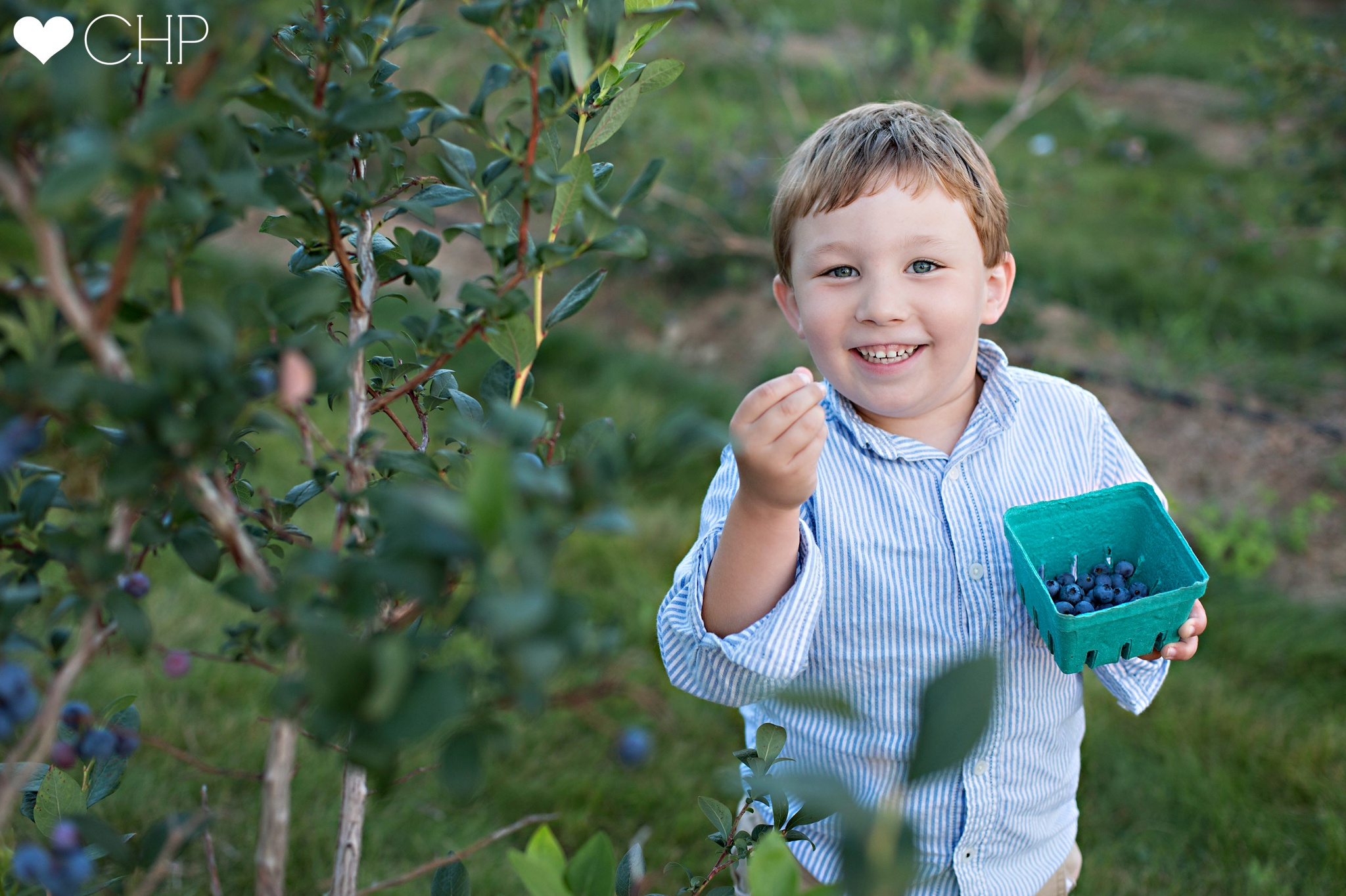Blueberry-picking-in-Maine