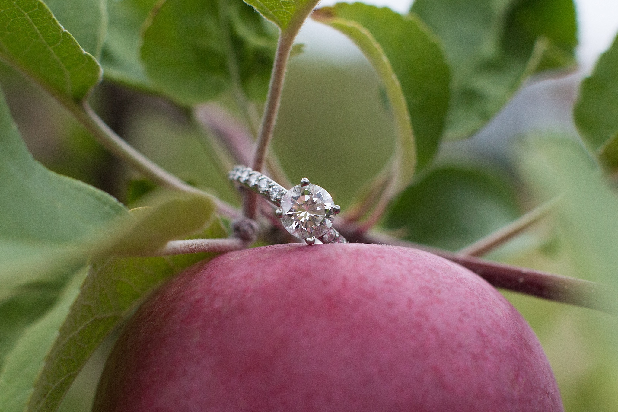 Apple-Orchard-Ring-Shot