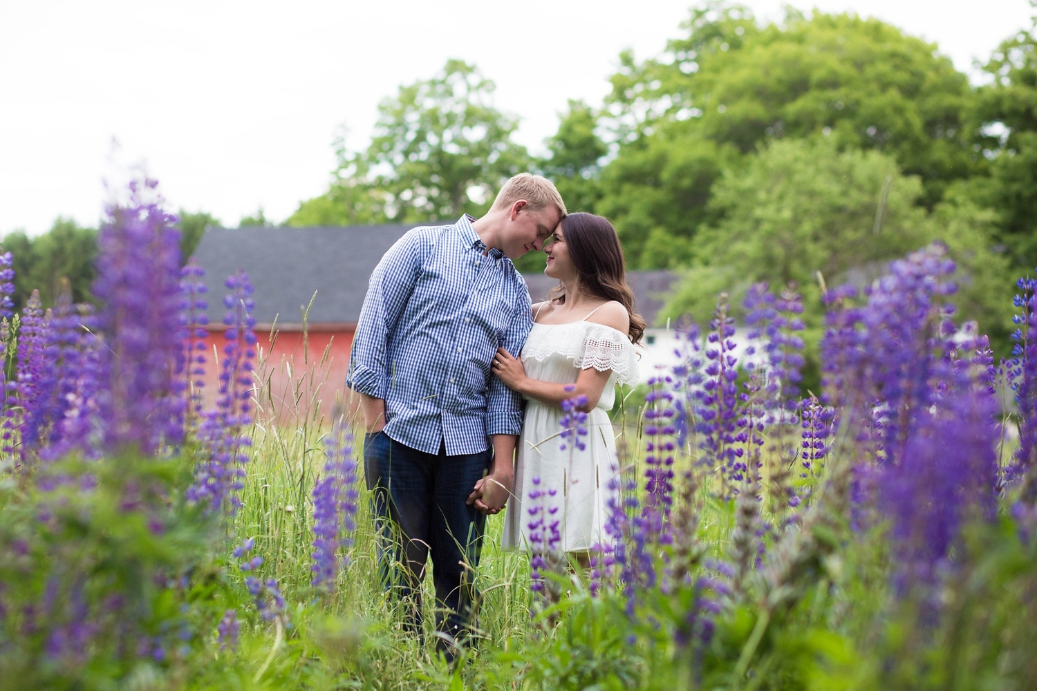 Engagement Pictures with Lupines Orono