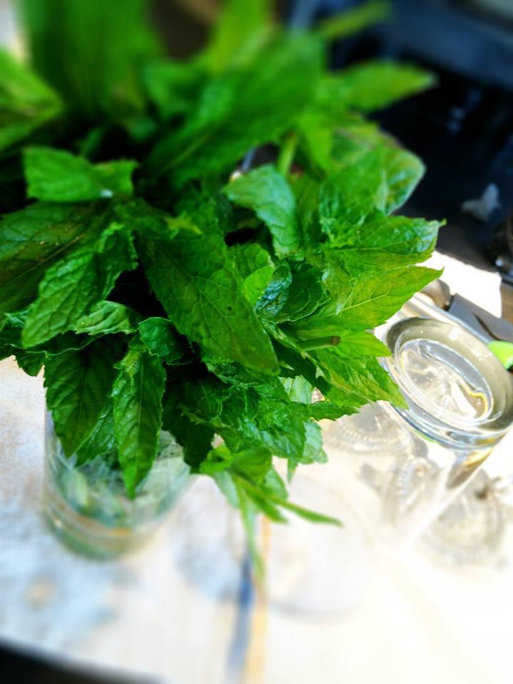 Fresh Mint.jpg