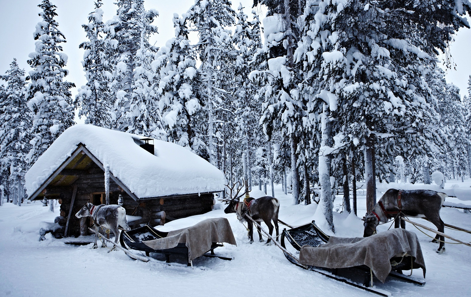 Lapland_travels_©PepAvila.189.jpg
