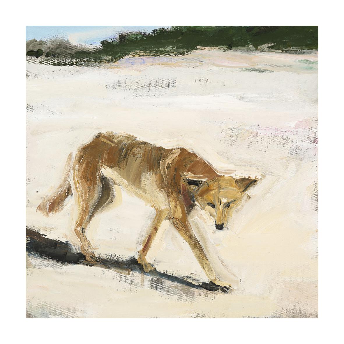 Dingo #1 fine art print 40 x 40cm