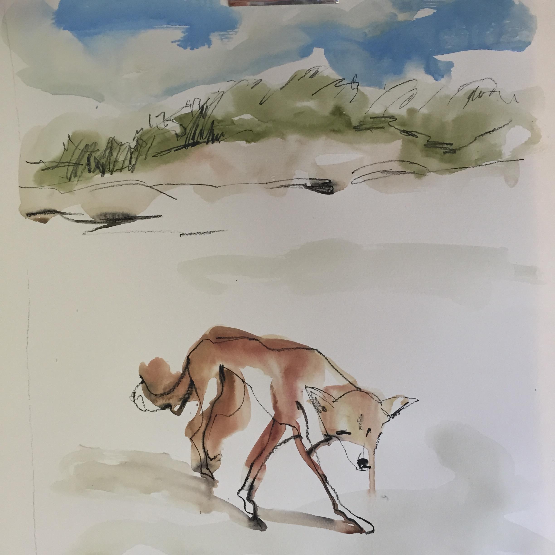 Dingo in the dunes