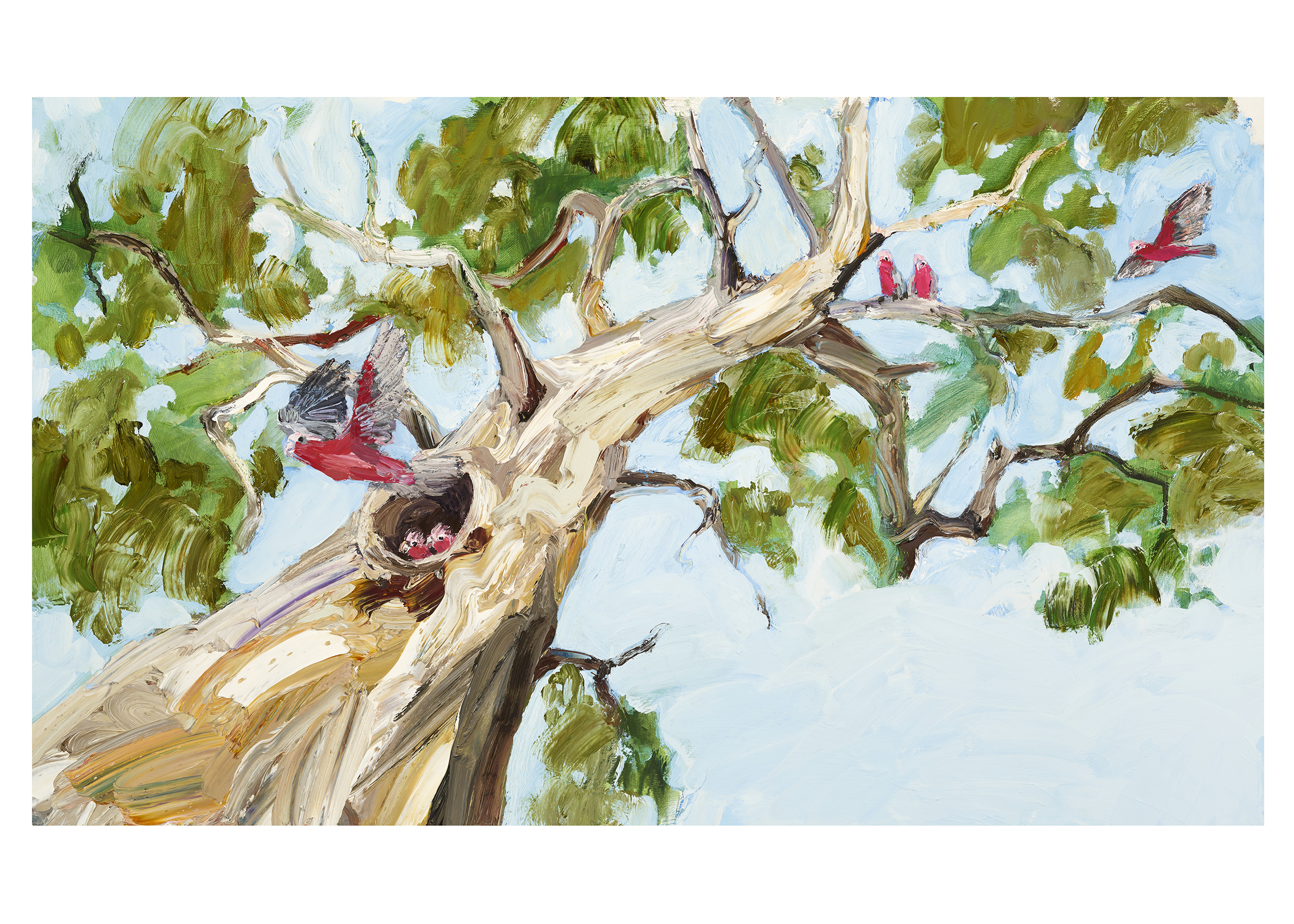 Illustration from Mallee Sky by Jodi Toering/Tannya Harricks