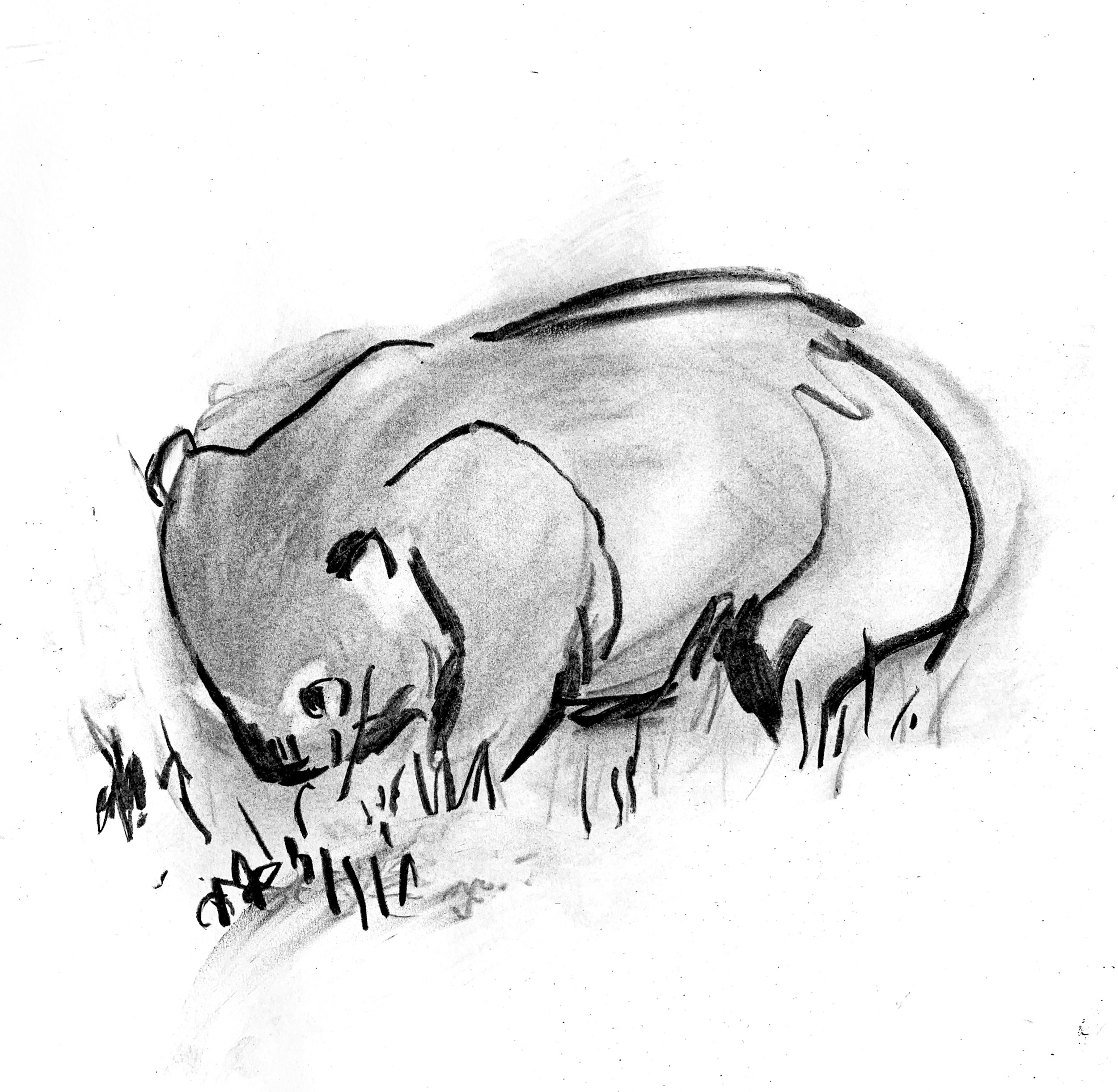 wombat sketch.jpg
