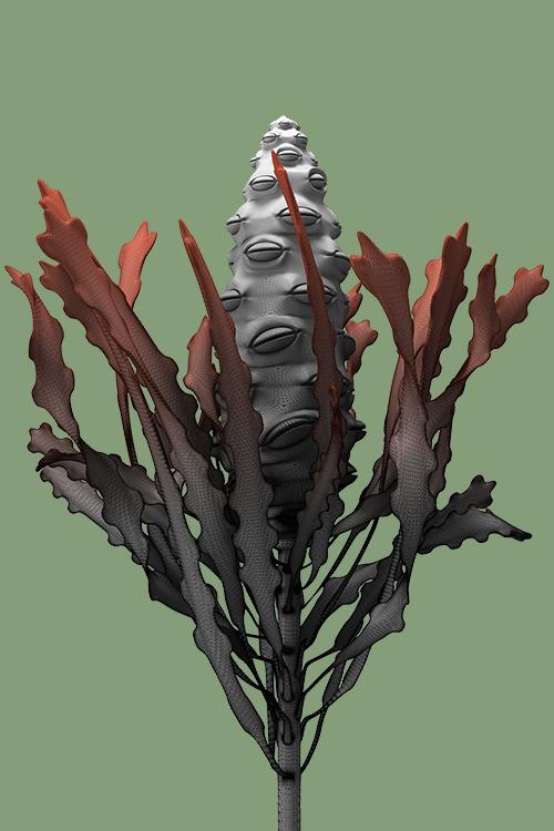 constructive botanics_banksia 03 (2015)  Giclée print on 188gsm Hahnemühle photo rag paper  594mm H x 424mm W (A2) + 50mm white border  Edition x 20 + 1 x Artist Proof