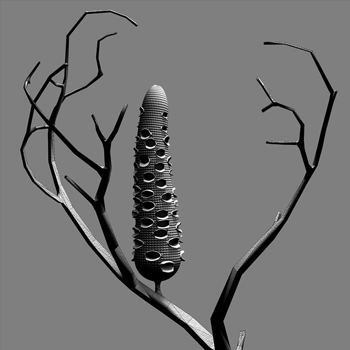 constructive_botanics_banksia/sketch_01  Edition x  20   40 cm H x 40cm W unframed)  Giclée print on 188gsm Hahnemühle photo rag paper