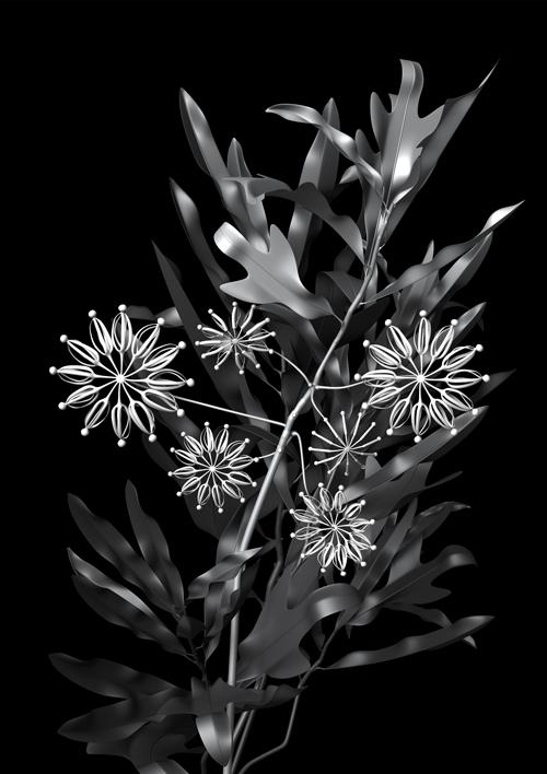 constructive_botanics/stenocarpus_01(firewheel)  Limited Edition (A1) x 20  840mm H x 595mm W  Giclée print on 188gsm Hahnemühle photo rag paper