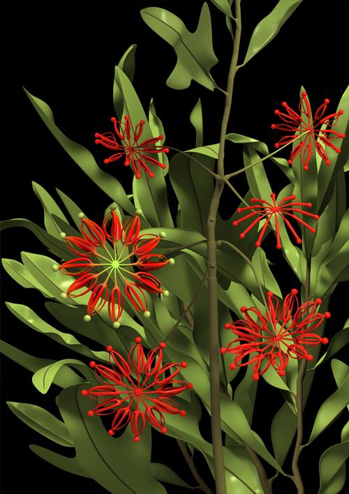 constructive_botanics/stenocarpus_02(firewheel)  Limited Edition (A1) x 20  840mm H x 595mm W  Giclée print on 188gsm Hahnemühle photo rag paper
