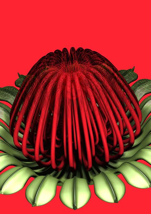 flower 01 (waratah) 2011 AP