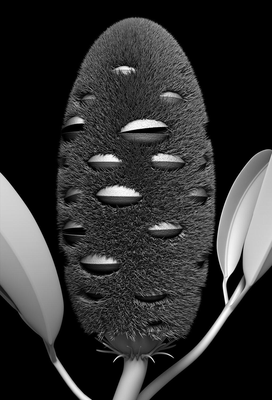 banksia_module_02_2019  A1 Edition x  20   77cm H x 53cm W (unframed)  104 cm H x 79cm W (framed)  Giclée print on 188gsm Hahnemühle photo rag paper