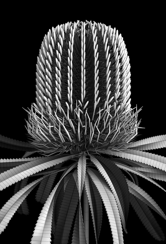 banksia_module_08_2019  A1 Edition x  20   77cm H x 53cm W (unframed)  104 cm H x 79cm W (framed)  Giclée print on 188gsm Hahnemühle photo rag paper