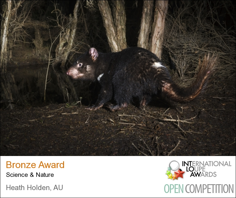 International Loupe Awards, bronze.