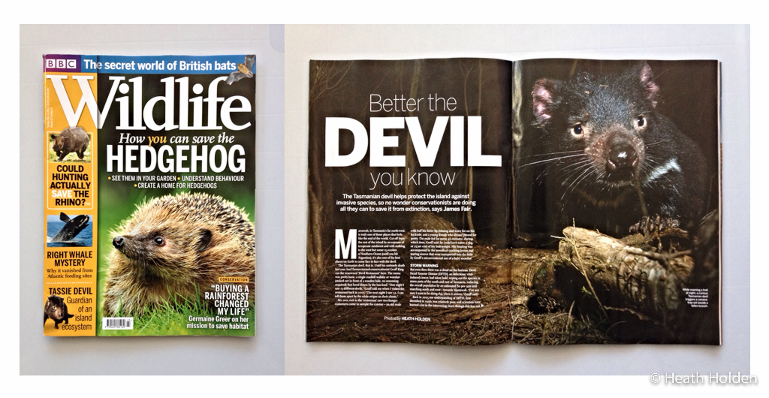 BBC Wildlife spring issue, 5 page Tasmanian devil feature.