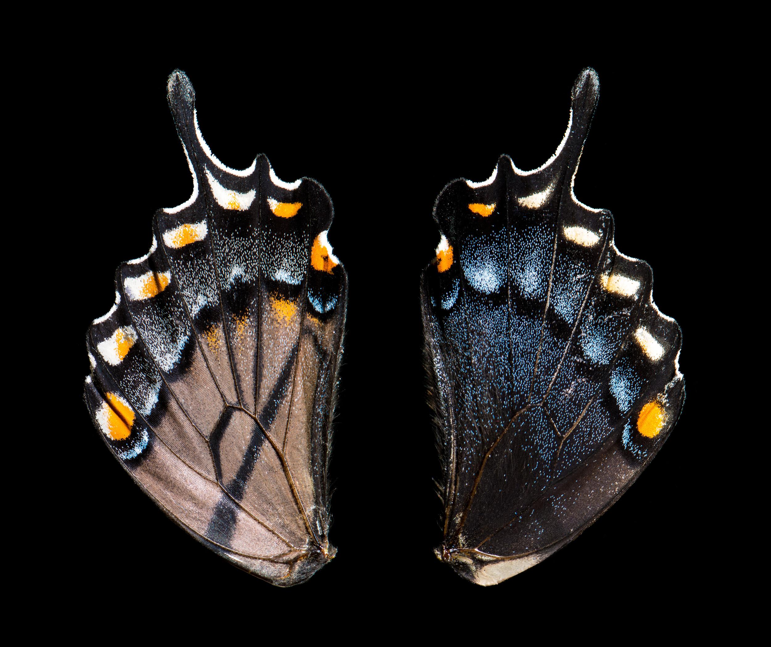 butterflywings-tumblr.jpg