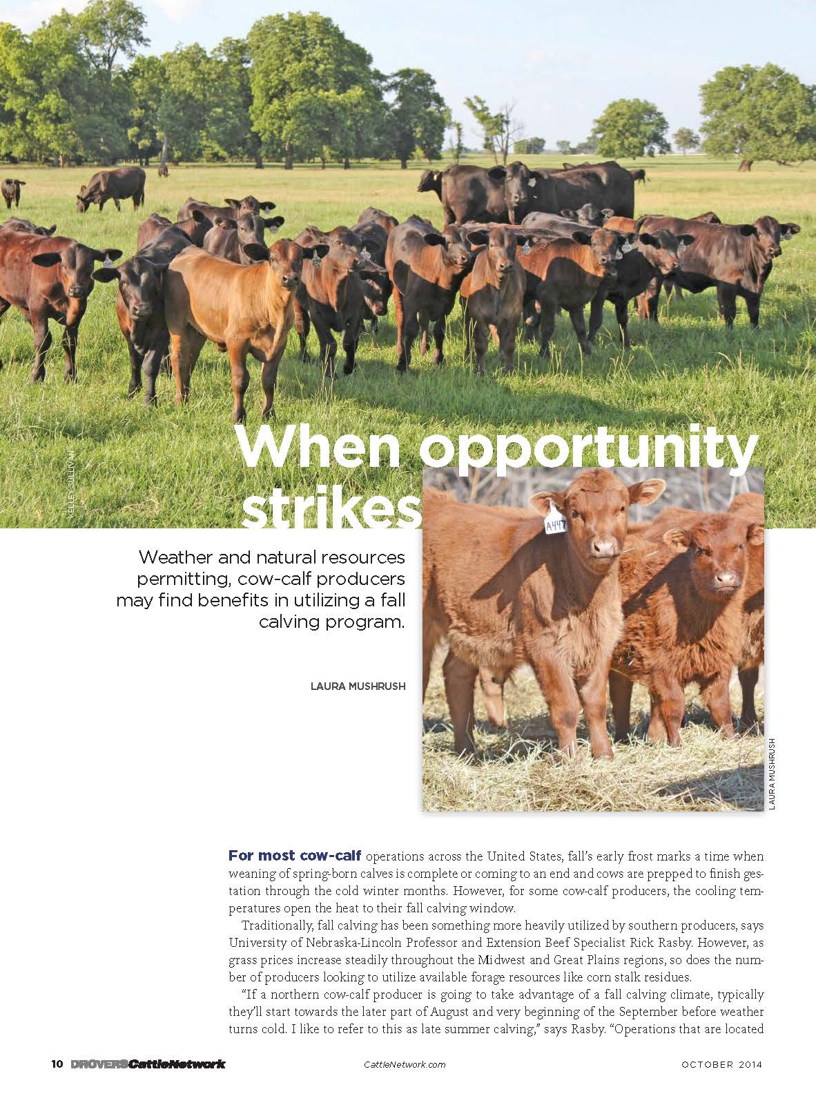 http://www.cattlenetwork.com/cattle-news/Fall-calving-when-the-opportunity-strikes--280635802.html?llsms=1028842&c=y
