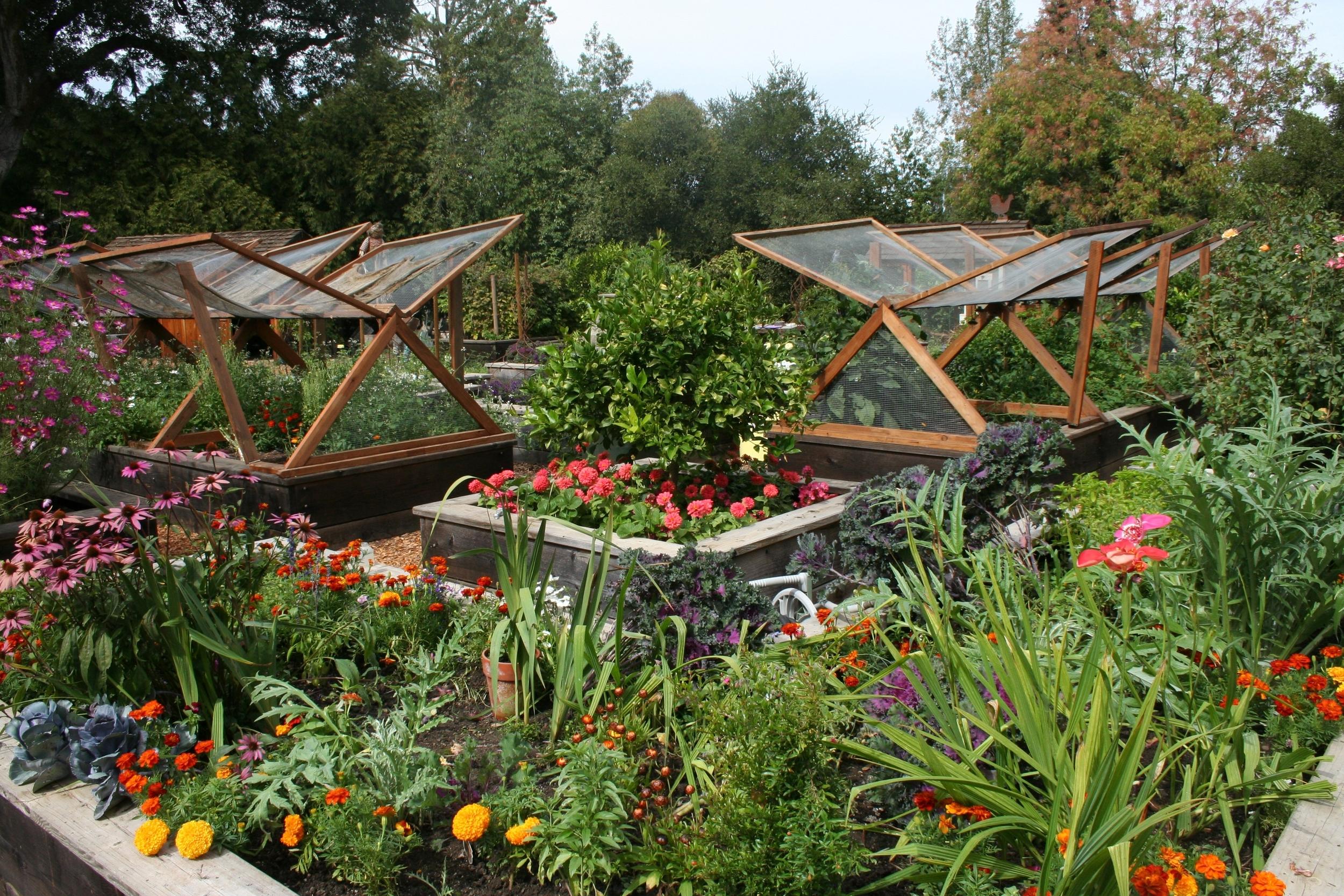 Veggie garden-1.JPG