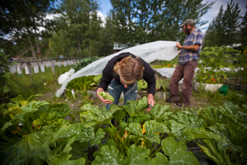 Harvesting from the WMC garden