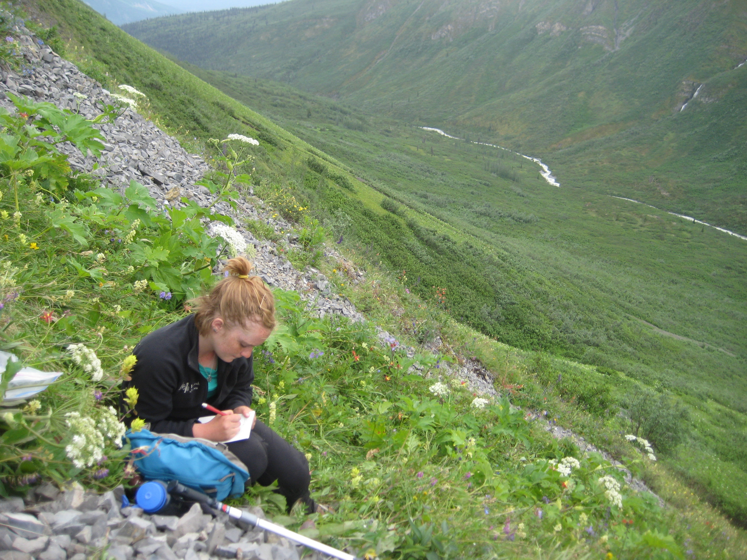 A student taking field notes on alpine vegetation in the Wrangell Mountains