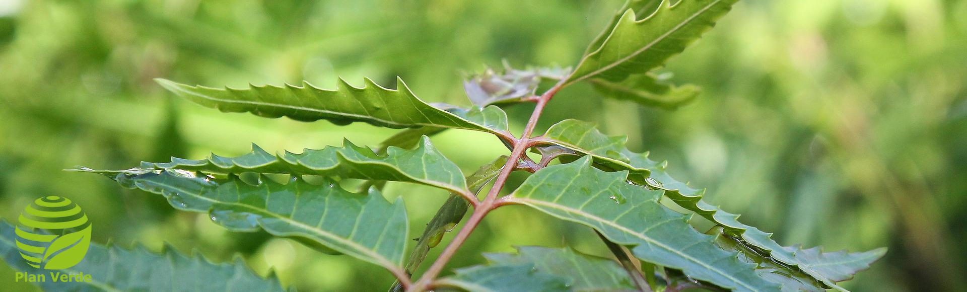 Bild:  plan-verde.org