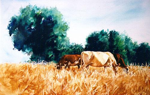 cows-grazing1_500.jpg