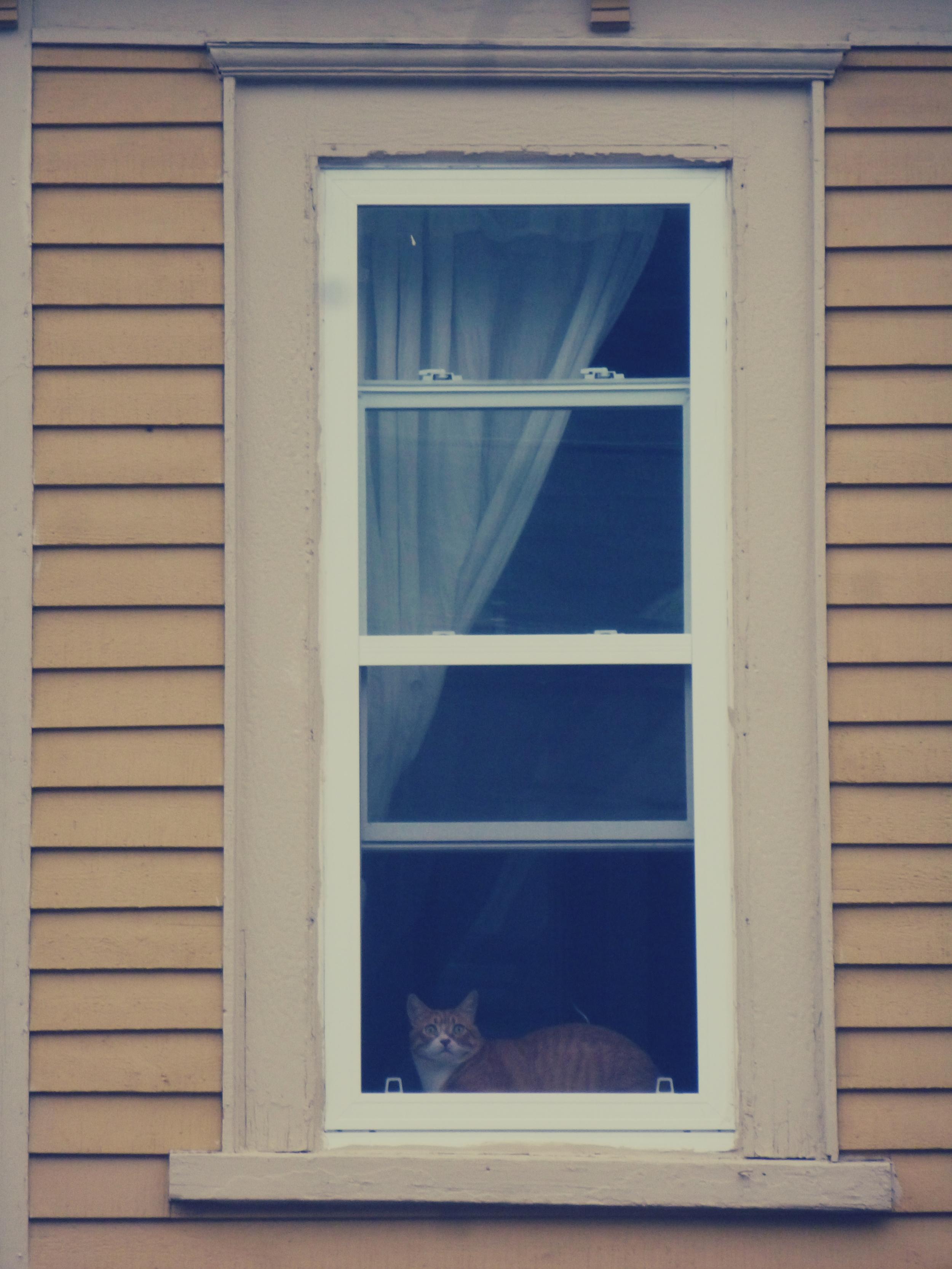 Window with Tom Cat