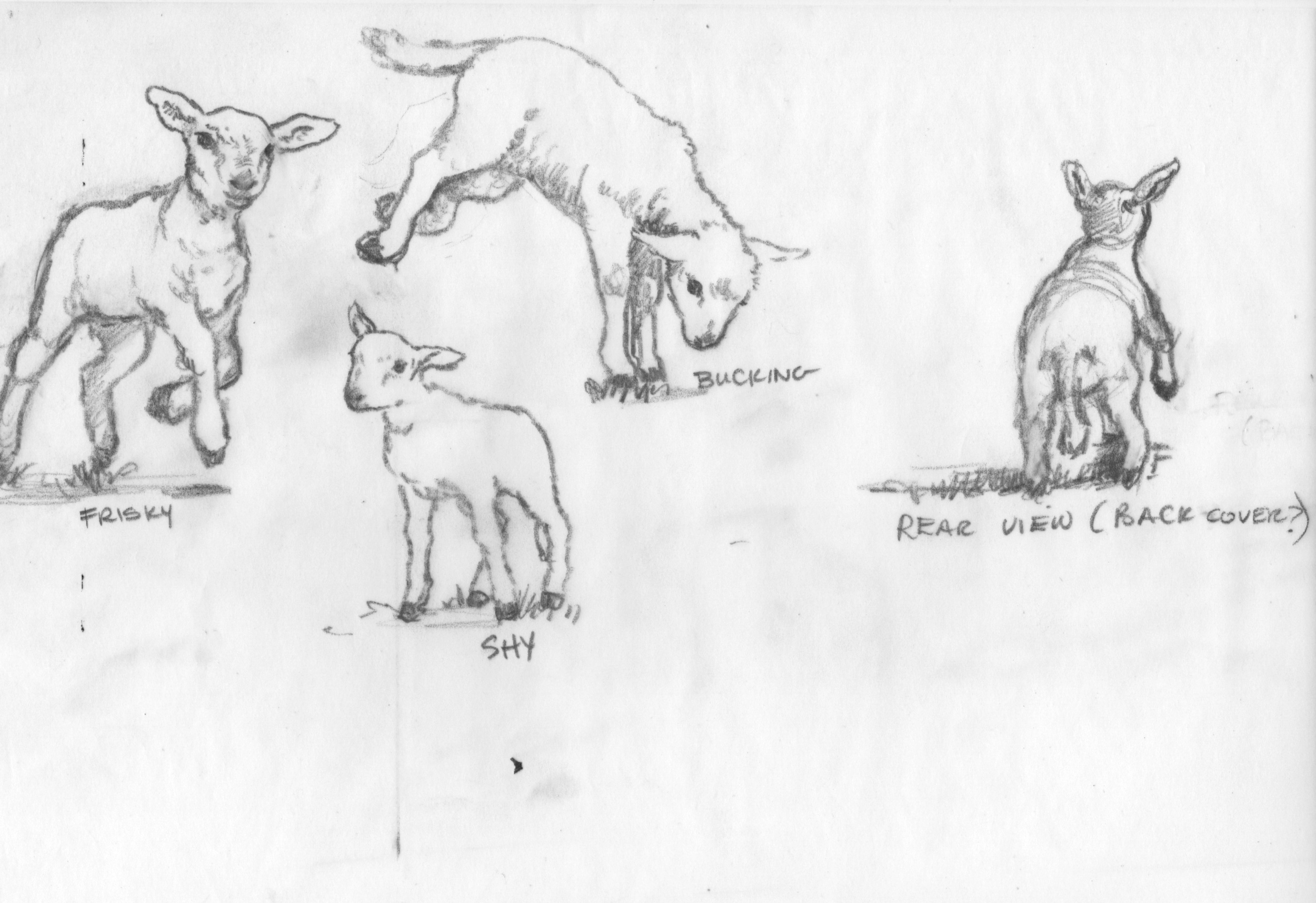 lamb scans.jpg