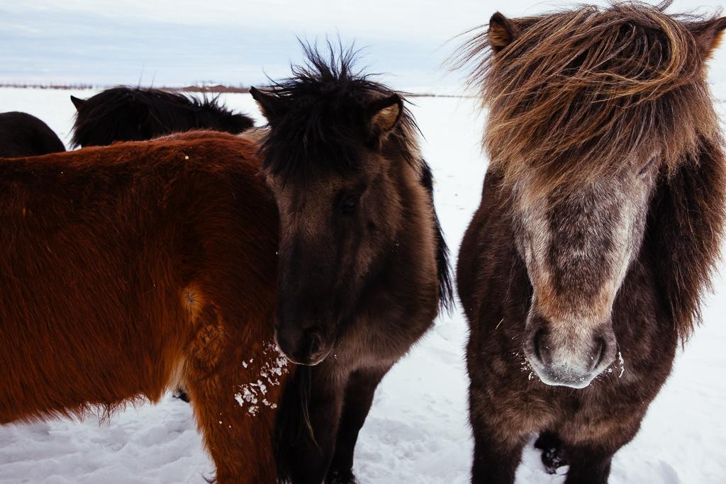 Iceland-7752.jpg