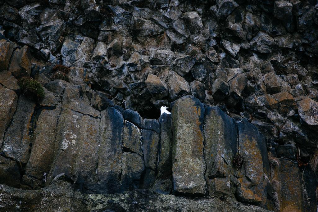 Iceland - Isolations-8040.jpg