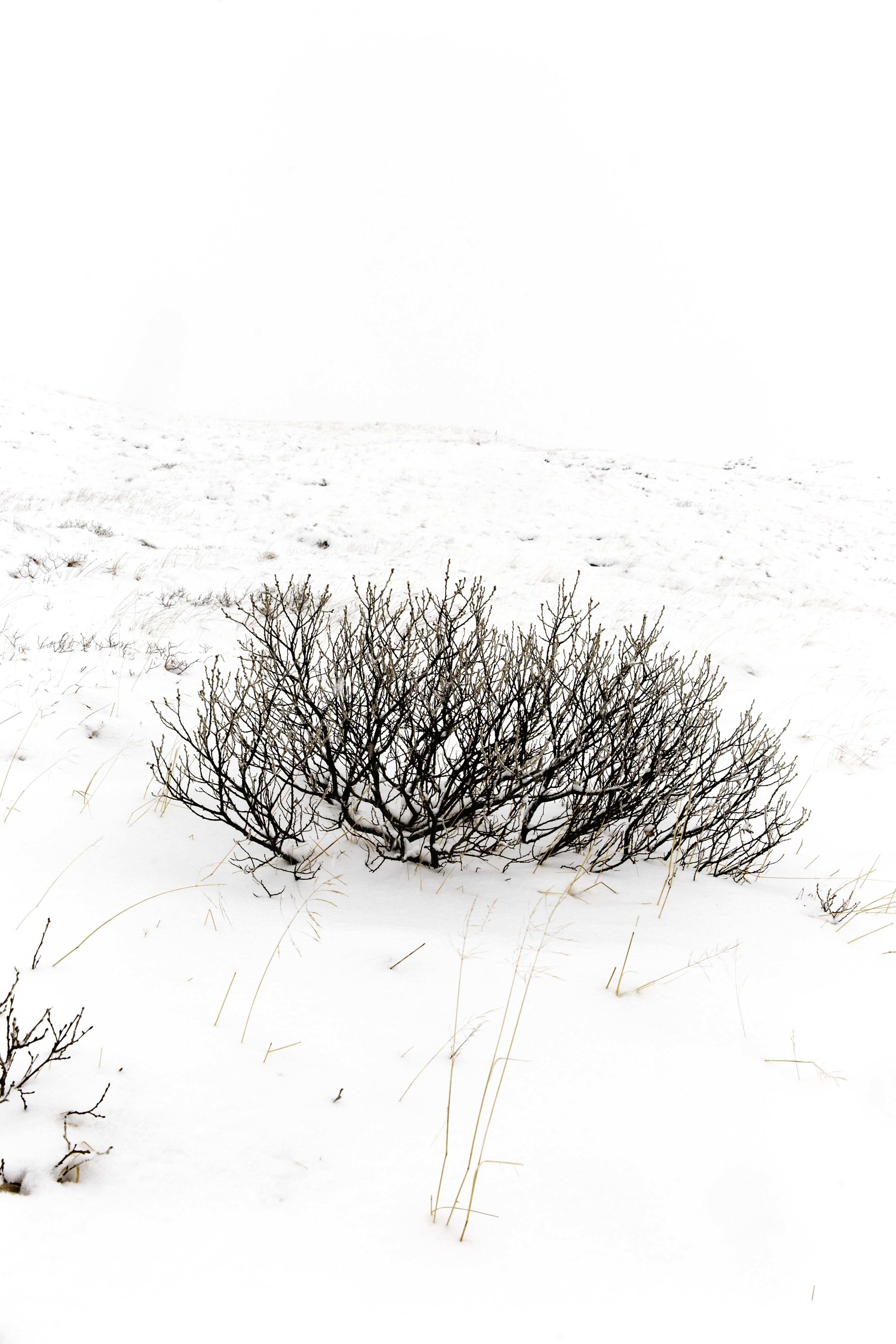 Iceland - Isolations-6507.jpg
