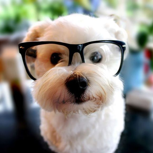 Dogs-with-glasses19.jpeg