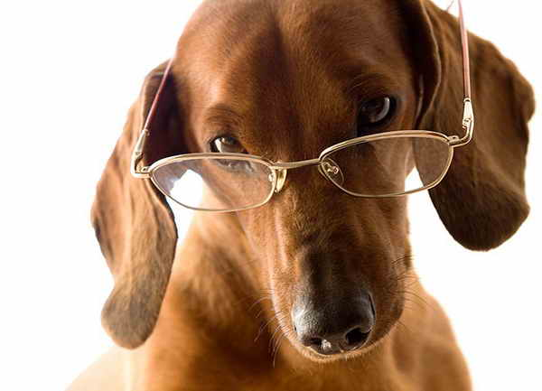 intelligent-dogs-with-glasses_02.jpg