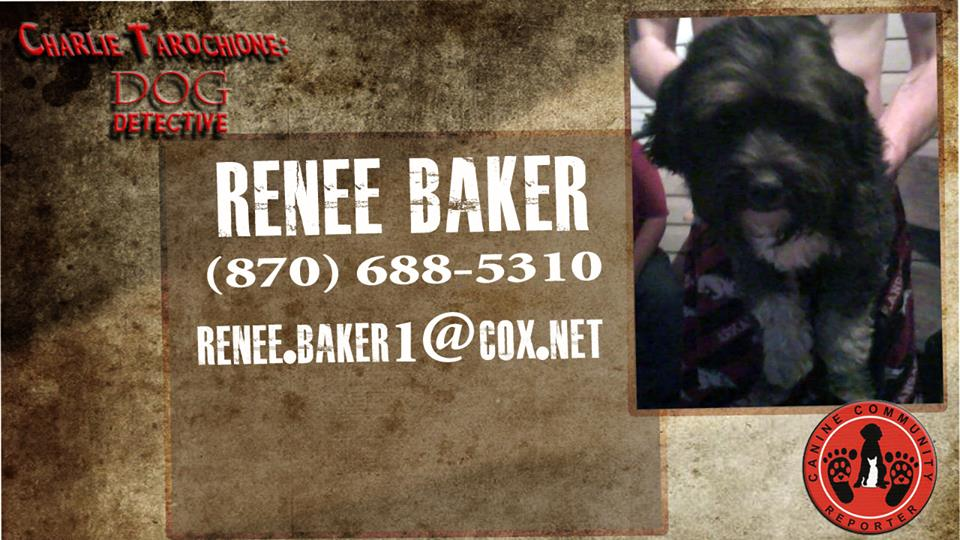 """Want to be the Furever Pawents for """"No Name""""? Contact Renee."""