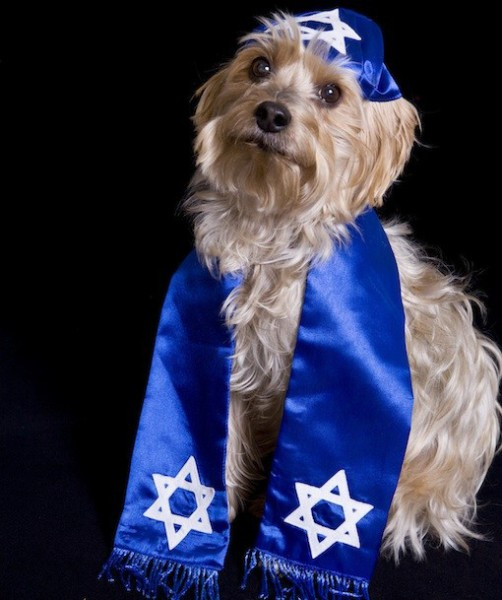 From the  Pups of Passover  at  Pawnation
