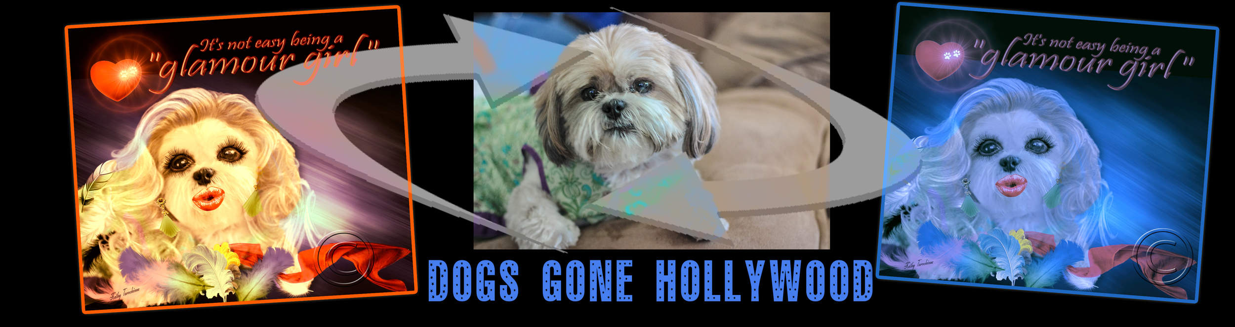 Check to see if your Dog could use a Hollywood Makeover and see if we can make your Pet into a Star!!!