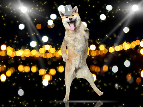 awesome dancing dog.jpg
