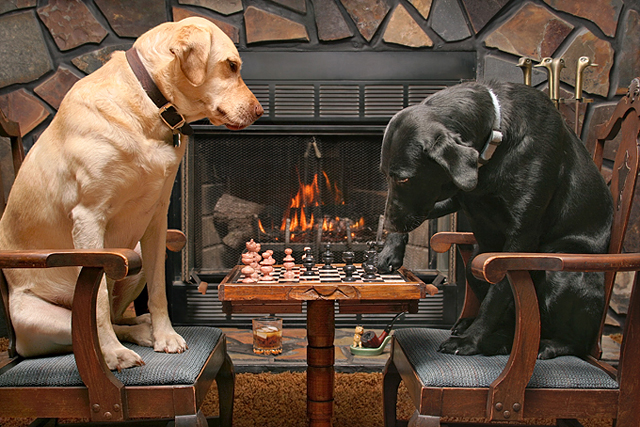 Labs-Playing-Chess-640.jpg