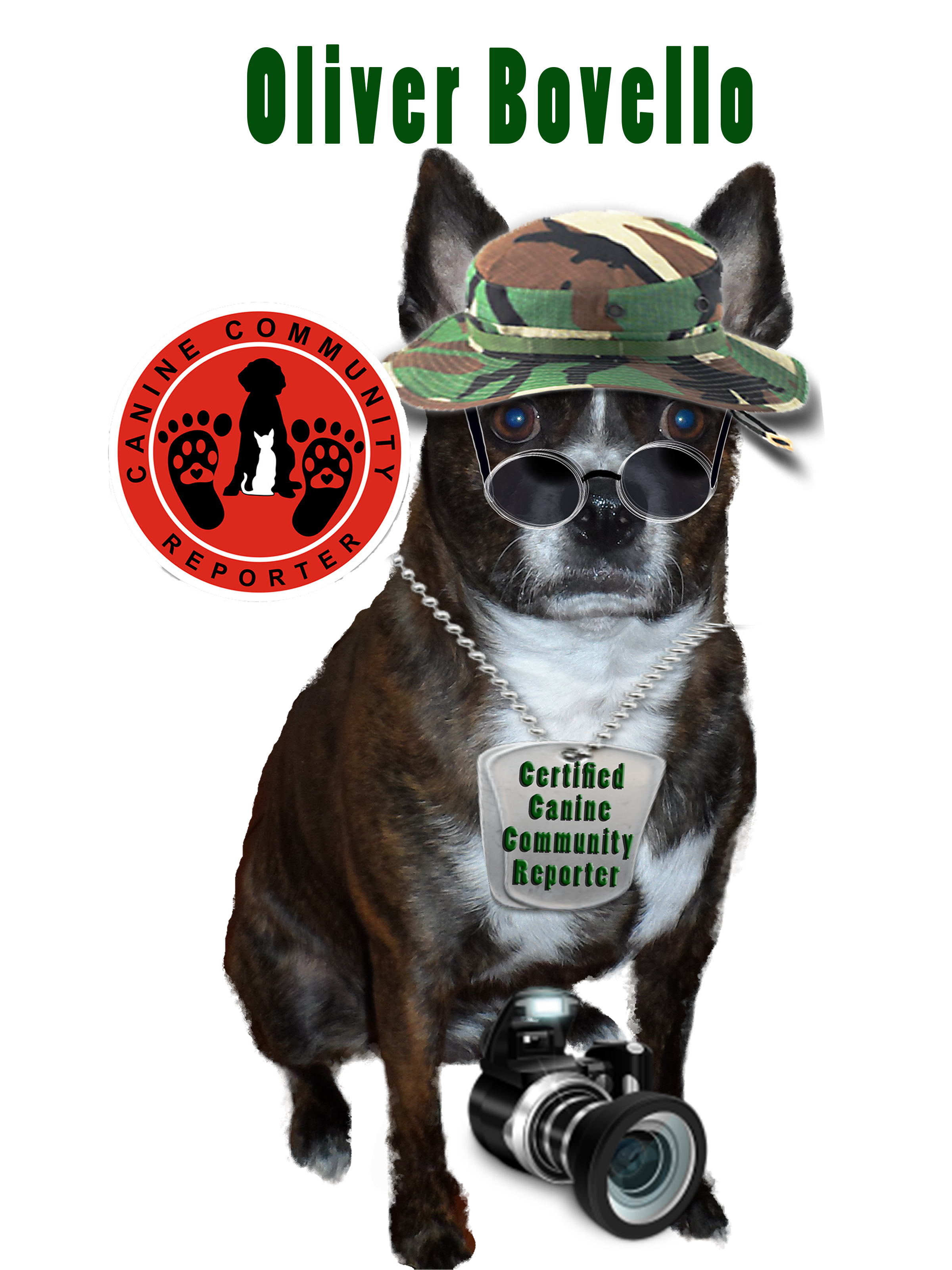 Meet Oliver Bovello, Canine Community Reporter for The Dog Connection TV Network