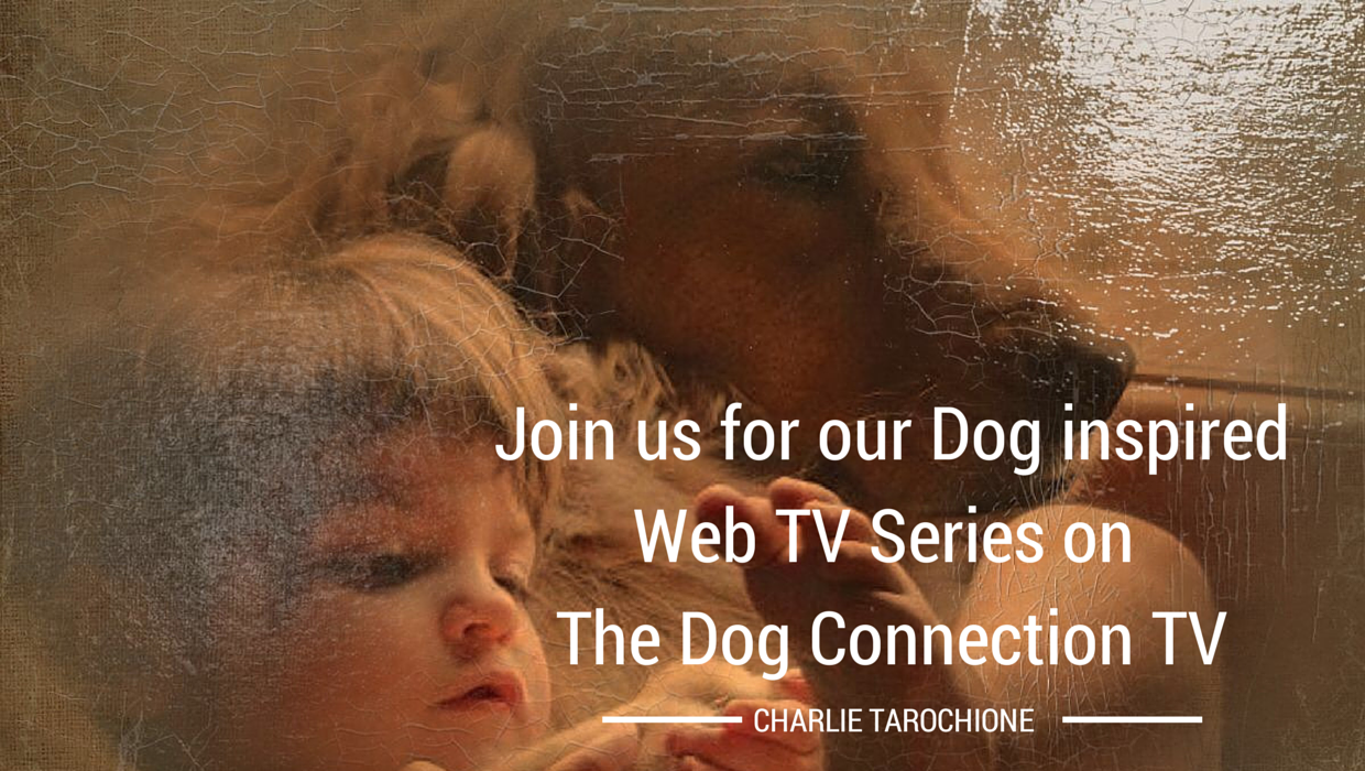 Click picture to go to sign up for your Dog to be on our Show