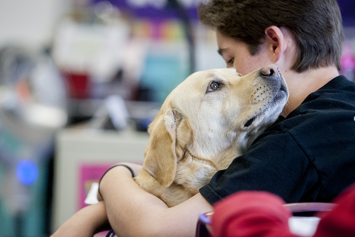 Jake Seff, a sixth grader at Sinagua middle school, gives a hug and a kiss to his service dog Quake, a female yellow lab, during Mrs. Morgan's English class. Quake has been with Seff for a year and half helping him maintain his blood sugar for his diabetes. When Seff has high blood sugar Quake will give him a high five and when it is low she will bow. Photo by Sean Ryan