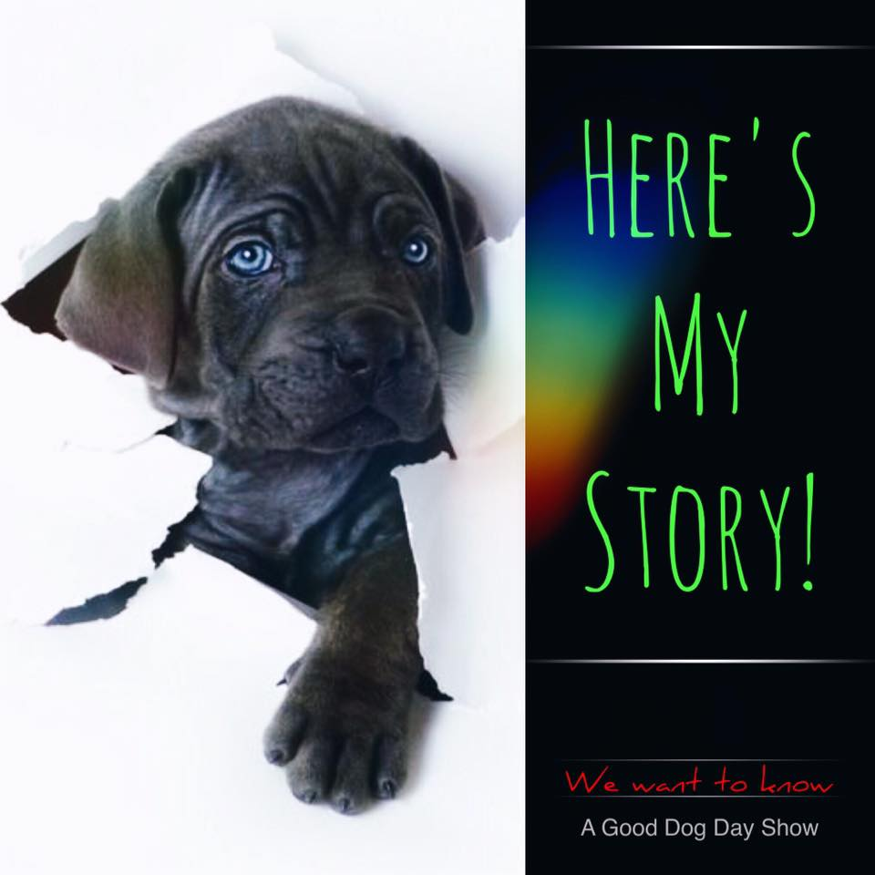 Submit Your Story - We are so very thankful for all the people, handlers and organizations who have contacted us about A Good Dog Day Show.We have designed this