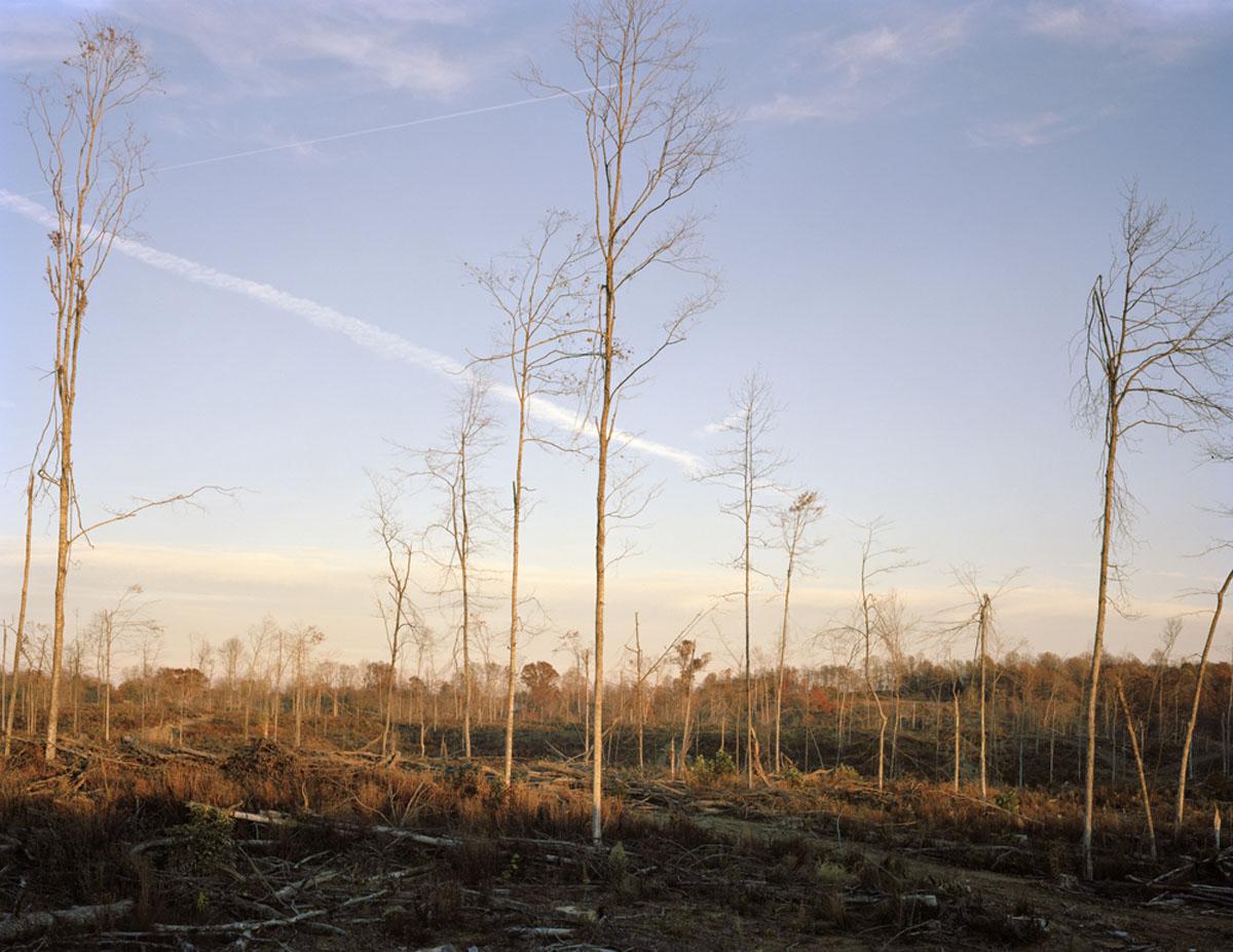 Civil War encampment site. Difficult, Tennessee  2011, archival pigment print