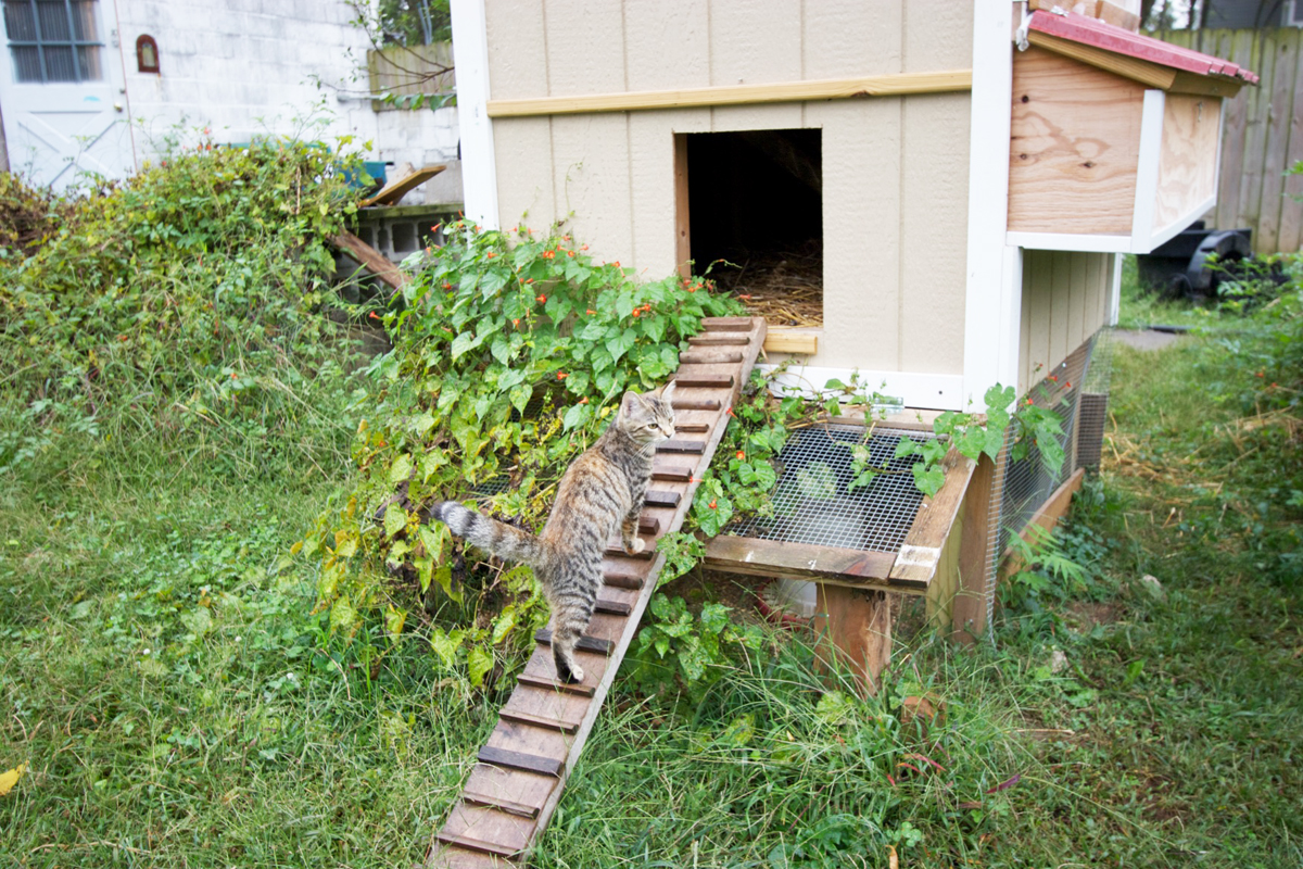 Haston's studio mate approaches the chicken coop visible from his studio (upper left)