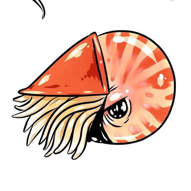 Some animals just don't even seem real. ... ... ... #nautilus #animals #marineanimals #sketch #ink #drawing #art #artwork #illustration #sketch #sketching #cartoon #toys #stickerclub #stickersubscription #subscriptionbox #subscriptionboxaddict