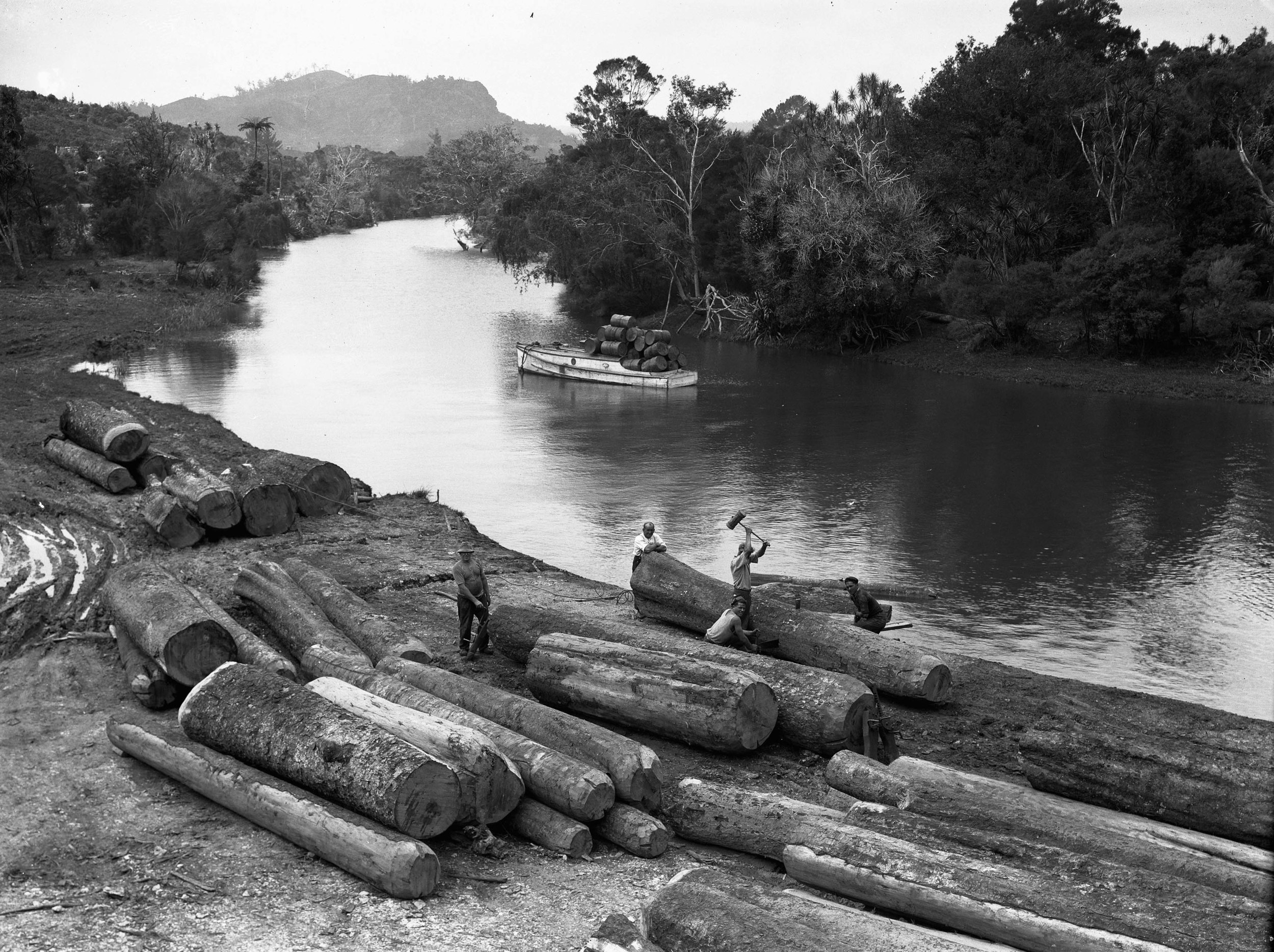 Logs ready for milling at the side of a river in the Northland area early 1900's