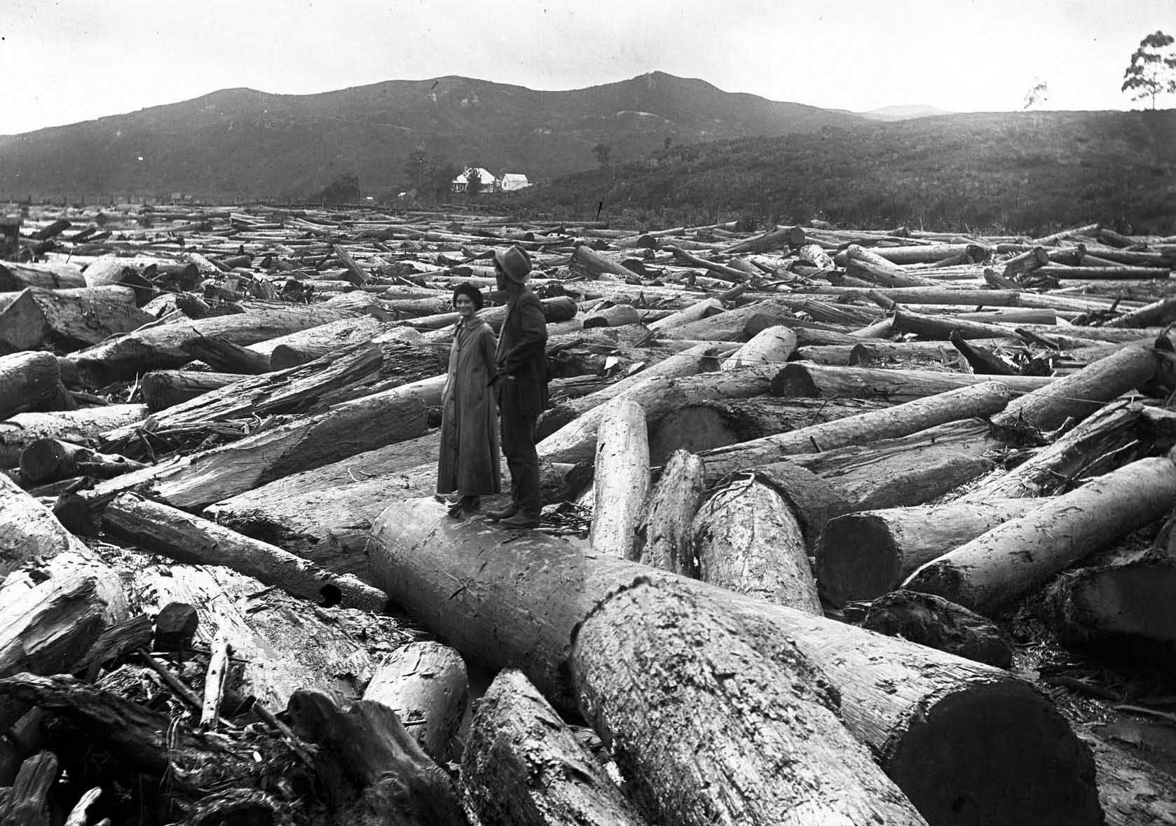 Kauri logs piled up near Coroglen after a log drive down the Waiwawa River. Two people stand on one of the logs