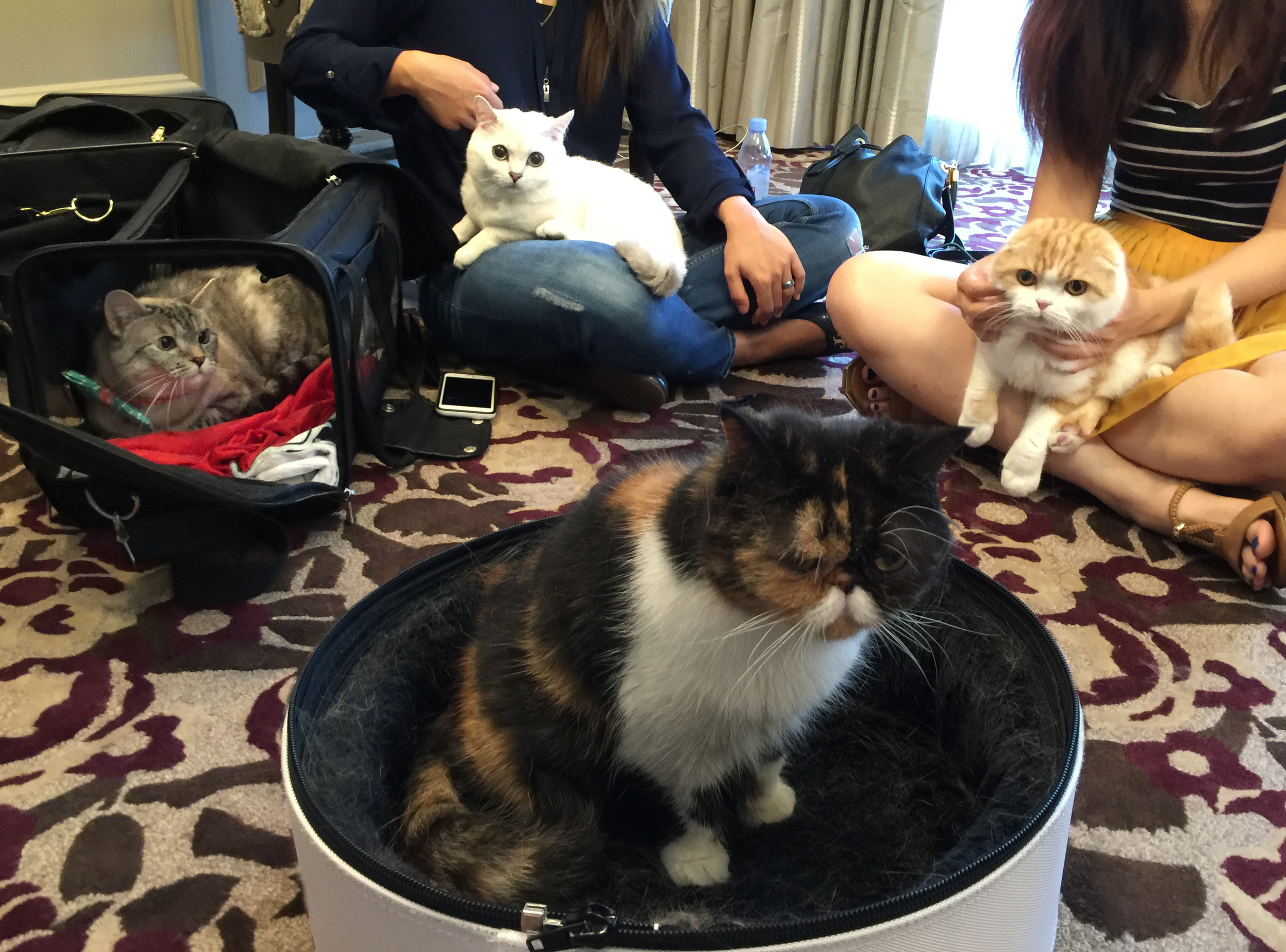 We hung out after a charity photo shoot and managed to get this rare photo of the Cat #squad . we discussed the supply-side policies in cat-dog macroeconomies. (nala cat, white coffee cat, pudge the cat)