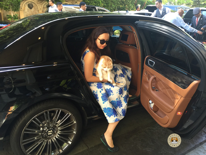 I started my journey in a chaffeured bentley, as cats are wont to do