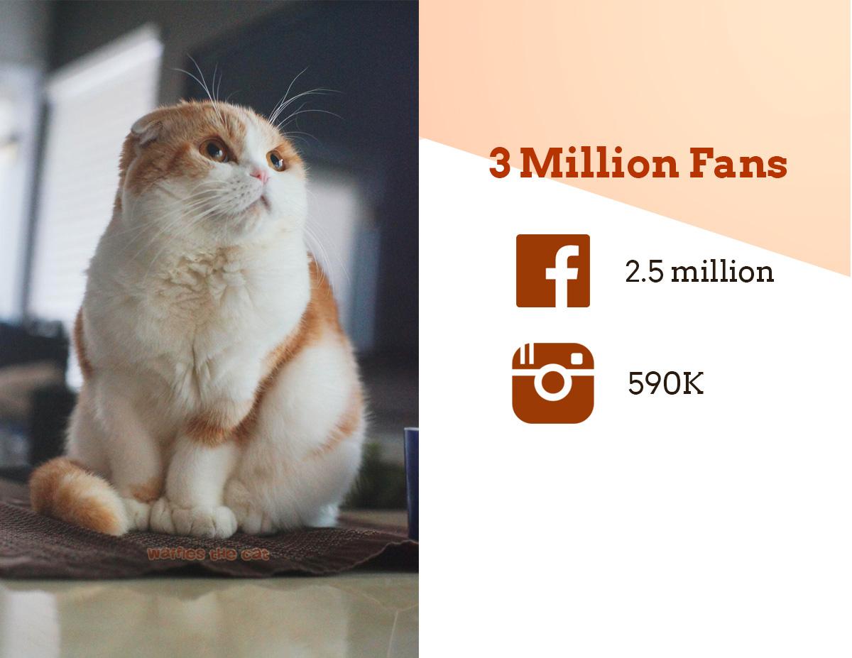 waffles has 3 million fans on social media.