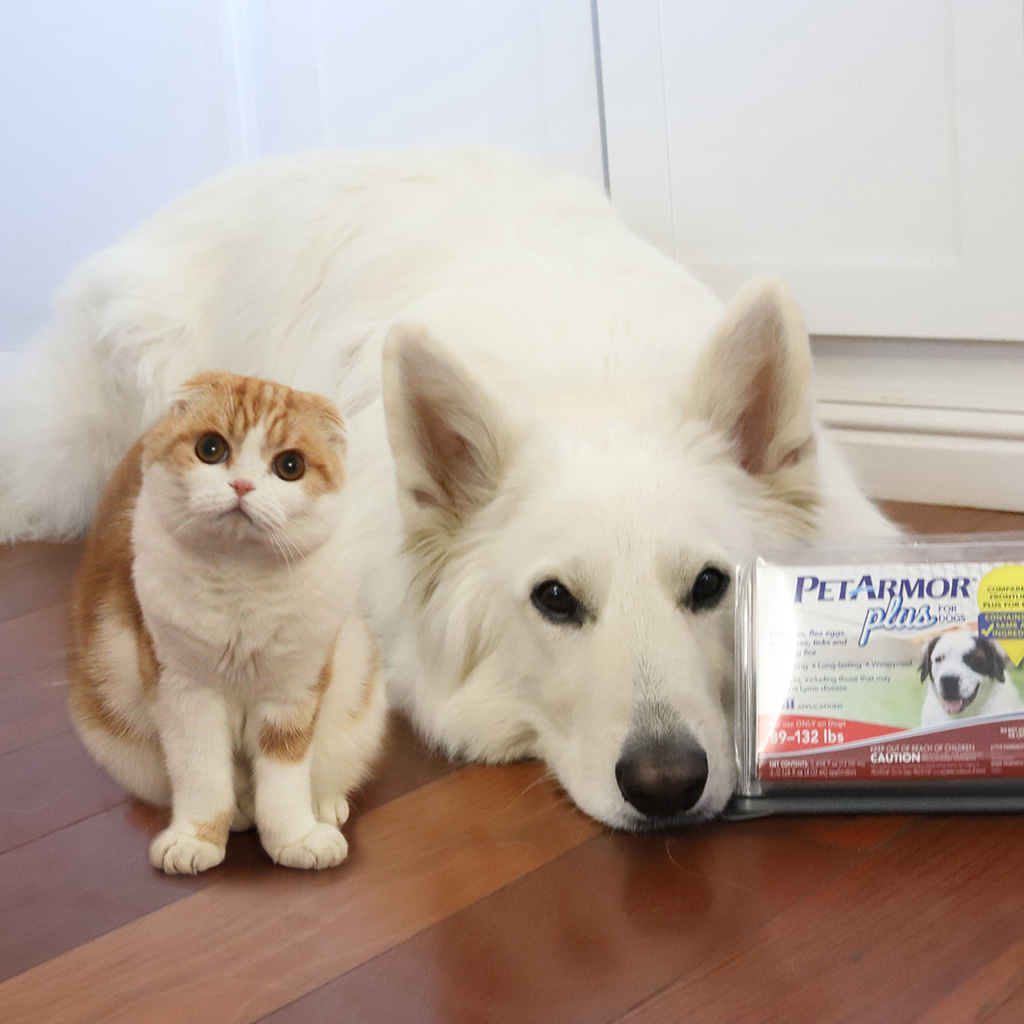 Photography and Photo-editing - We worked with Pet Armor to create a photo featuring Strider and Waffles and the logo of Pet Armor displayed clearly. We utilized professional photo-editing to place the cat and dog in the same space and make sure the logo was displayed clearly.